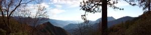 sequoia99