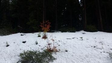 bend-snow