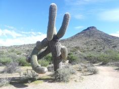 brown-ranch-saguaro