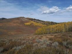 DeerV-high meadow